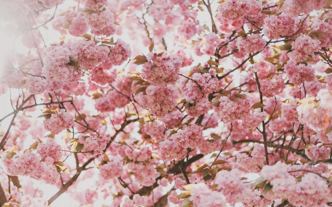 Frühjahrsputz für die Seele: 3 Tipps für mehr inneren Frieden und mehr Energie